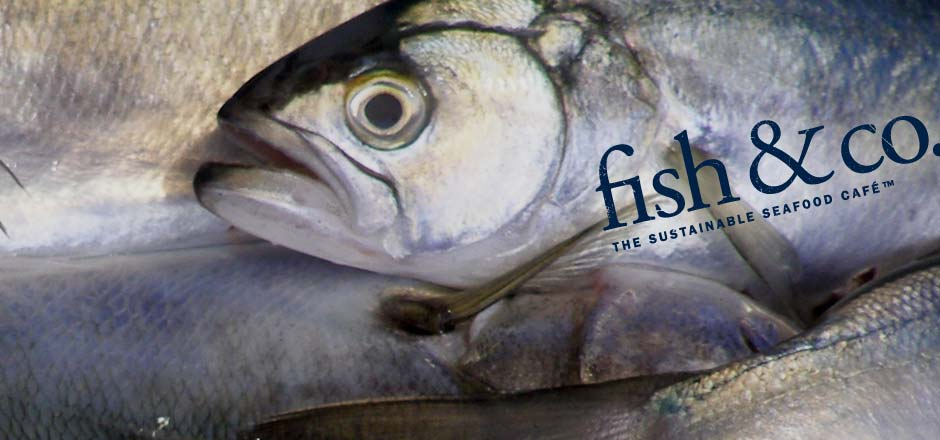 Premium Fresh Fish from Fish & Co The Sustainable Seafood Company