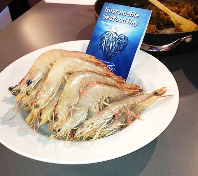 MSC certifed Banana prawns from the Northern Prawn Fishery for Sustainable seafood day Fish Co
