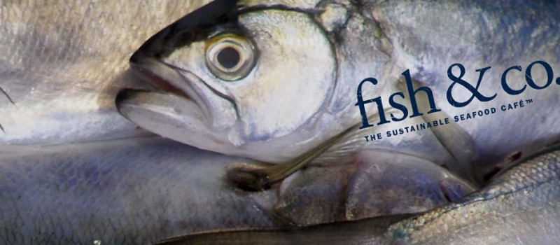Sustainable fish selected at fish co for List of fish to eat
