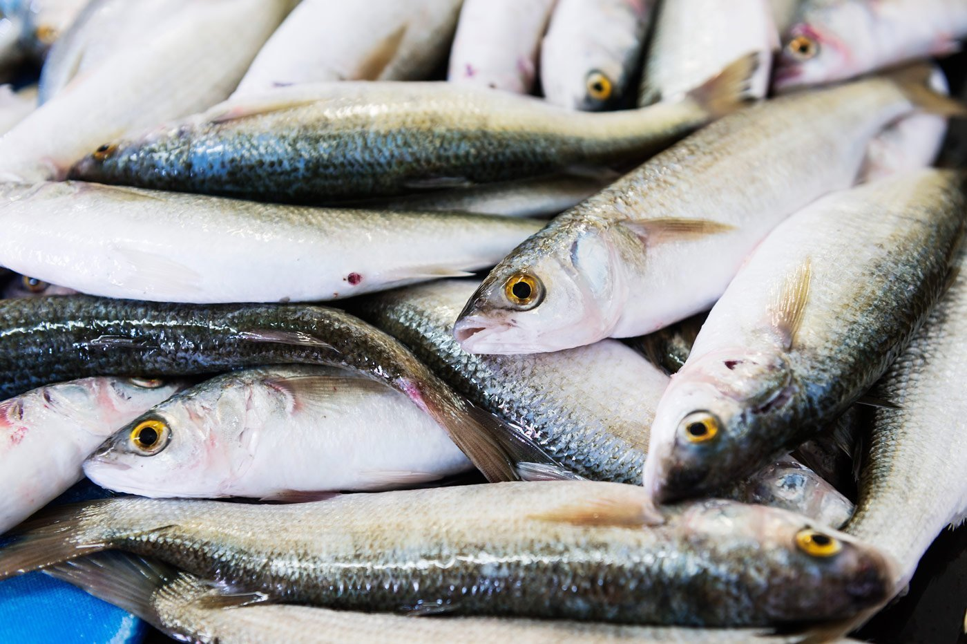 Sustainable fish selected at fish co for New zealand ling fish